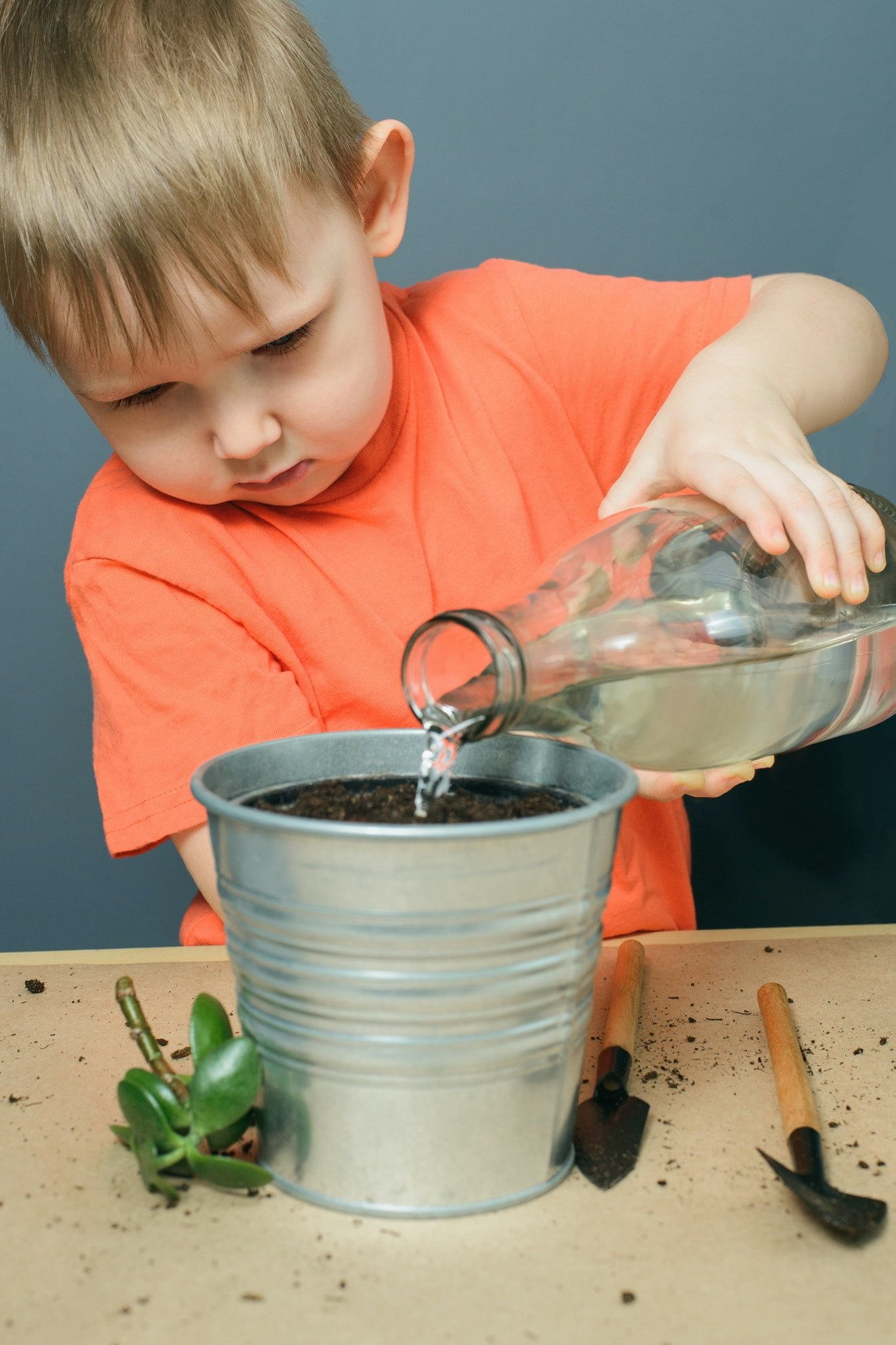 caucasian blond child boy watering ground for planting money tree plant in metal flower pot