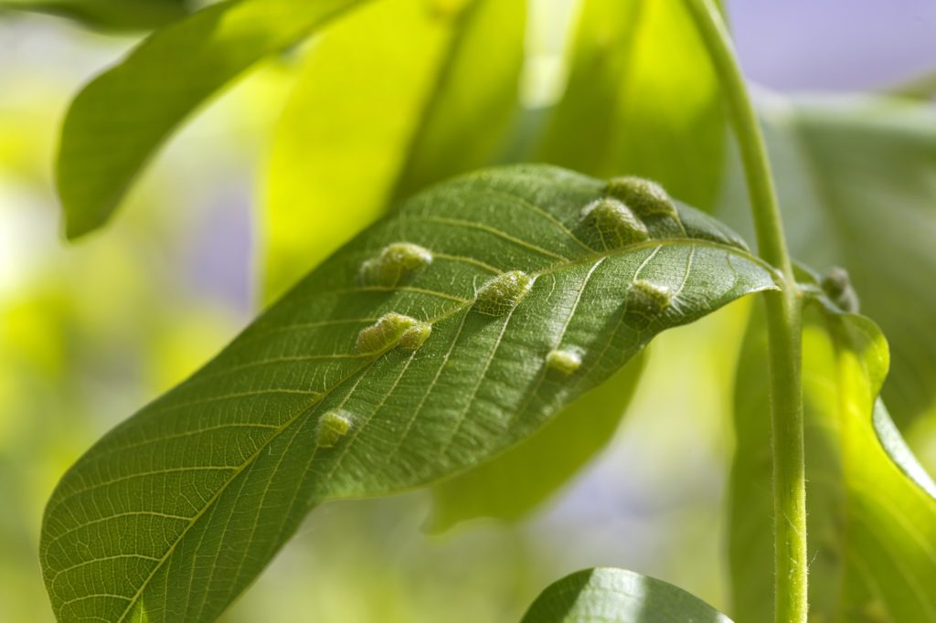 common diseases affecting trees