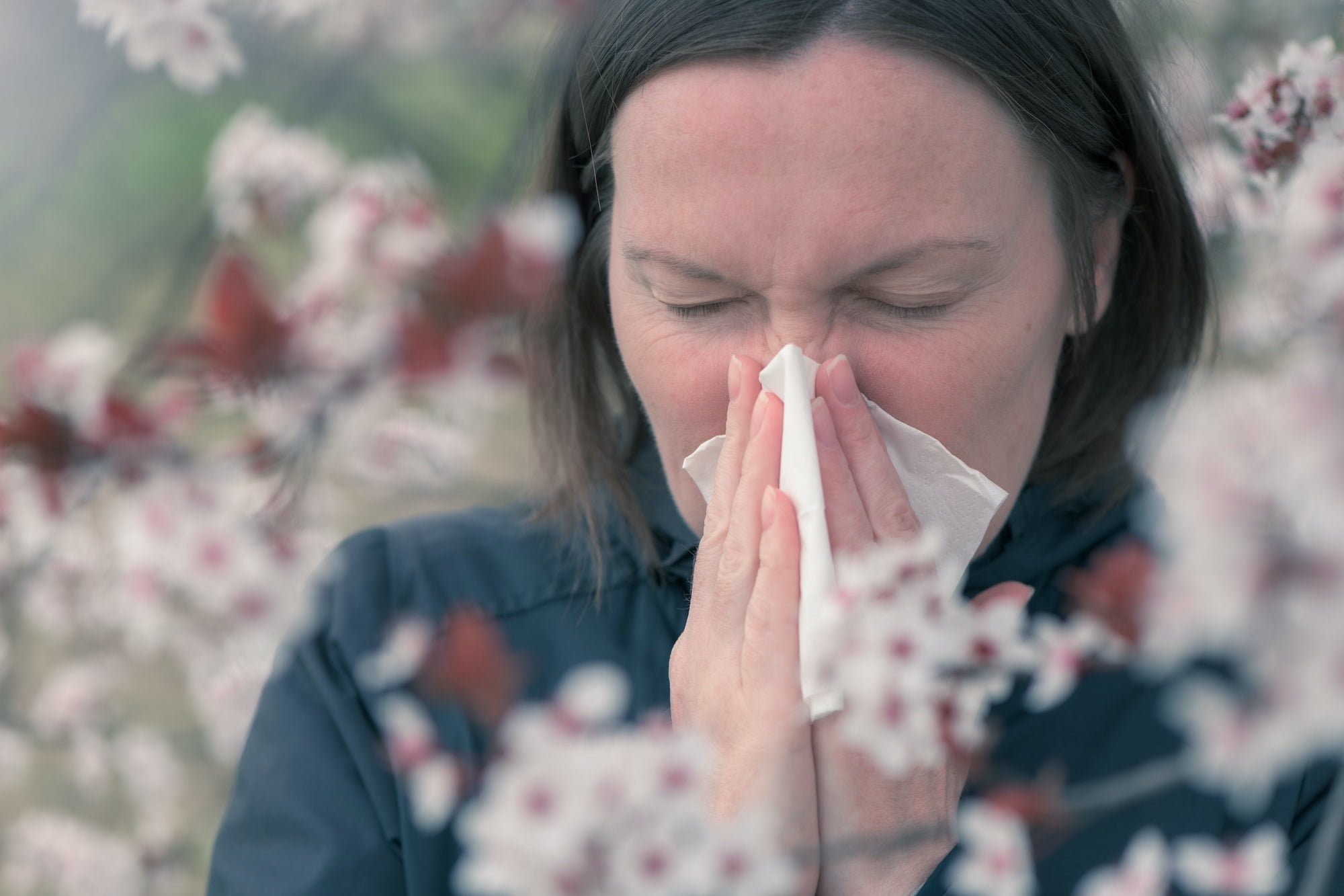 Tree pollen allergy in springtime concept