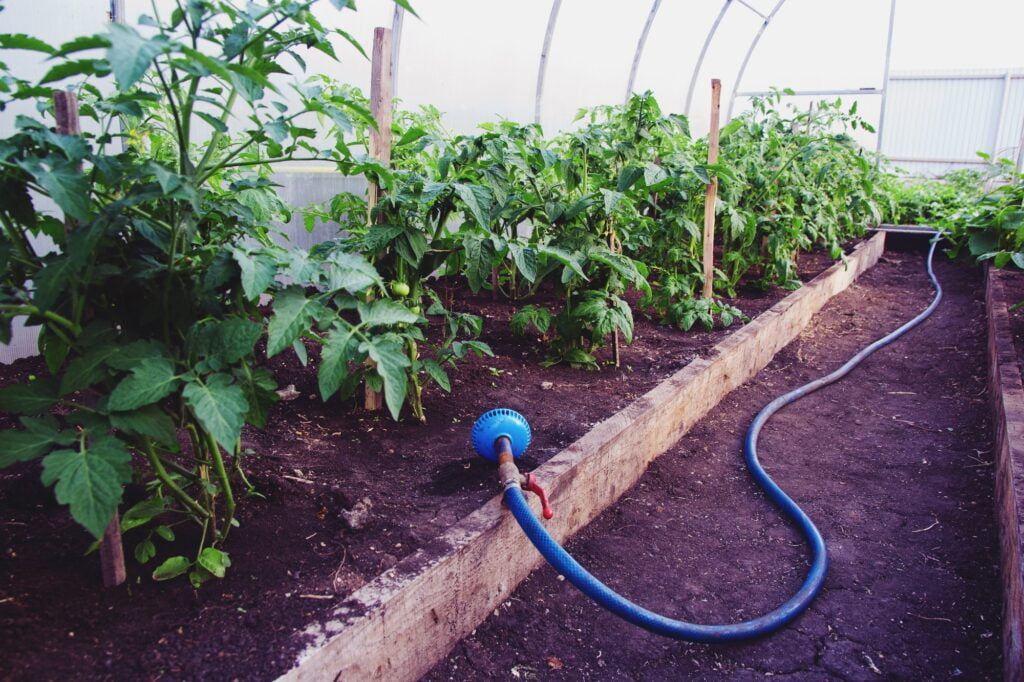 Greenhouse production of vegetables
