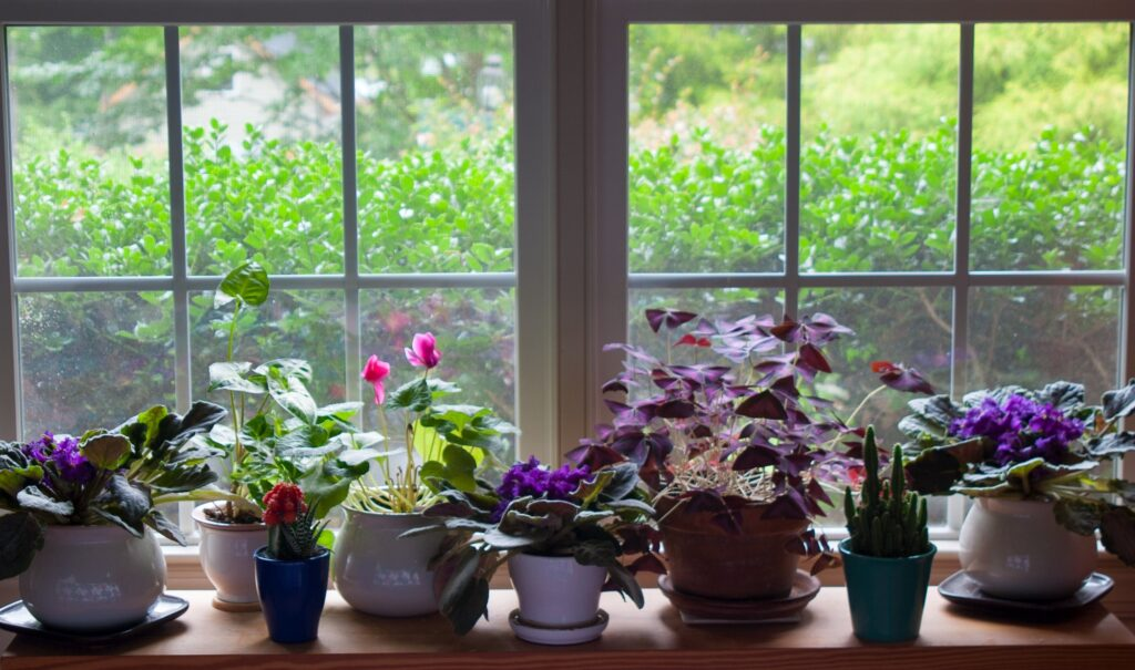 Houseplants on the edge