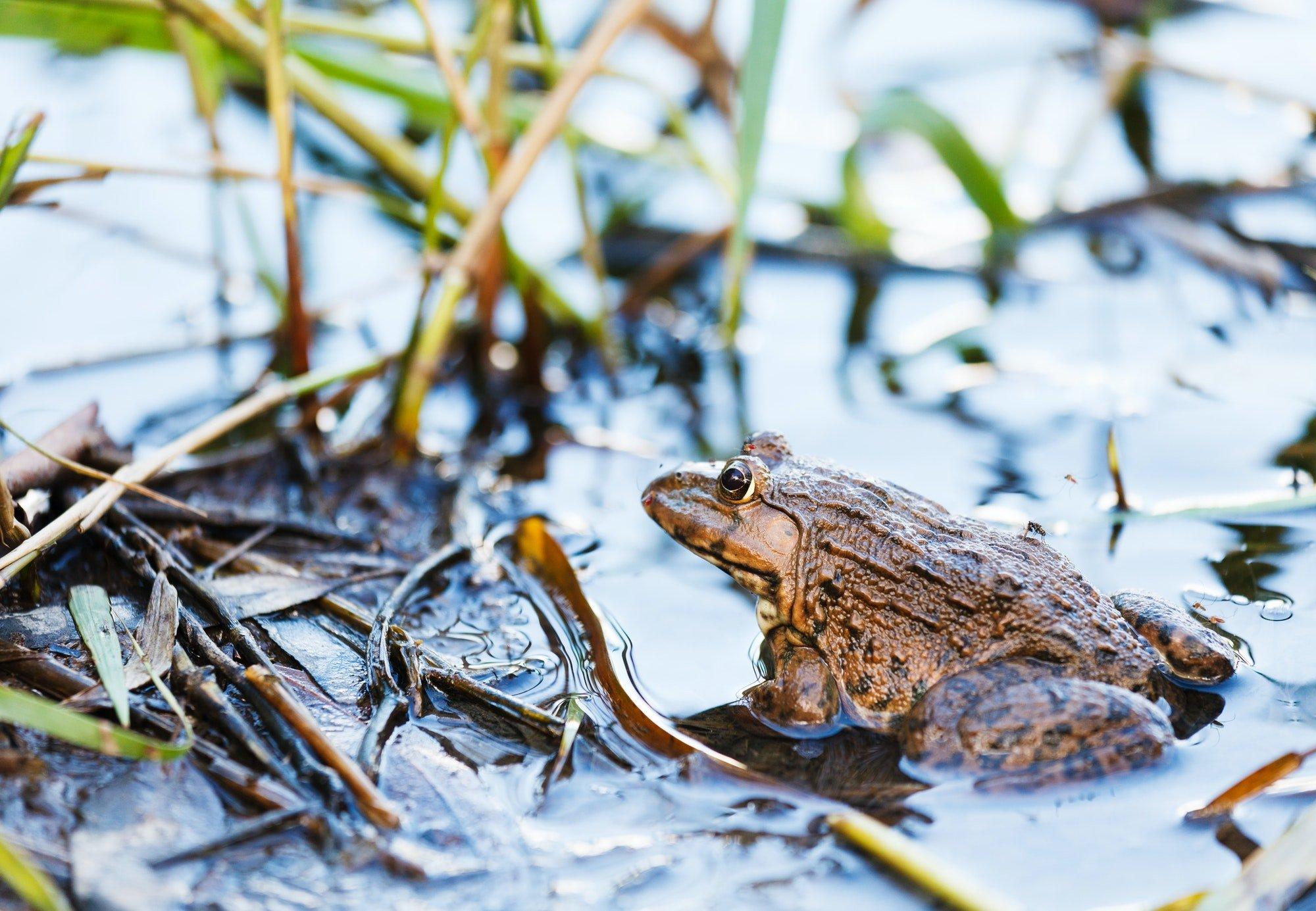Frog in lake
