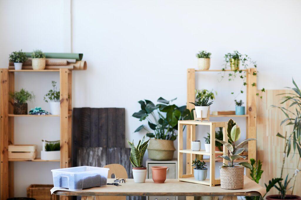 Houseplants Background
